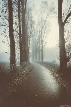 The Misty Path - I was trying to capture the misty morning mood. I got really lucky because after i took that shot the sun came out and all the fog was gone. But hey that's the life of a photographer, isn't?