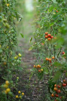 my vegetable love should grow