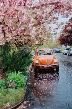Je crois que l'environnement est plus craquant que la voiture elle même. Mélange de rose et de orange très réussi ! #voiture #vintage