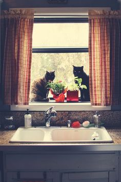 Kediçikler....