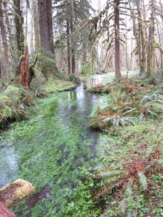 Stream in the Quinault Country Roads, River, Places, Outdoor, Outdoors, Outdoor Games, The Great Outdoors, Rivers, Lugares