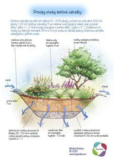 Kartičky návrhy — KT gardens ktgardens Garden Plants, Indoor Plants, 20 M2, Landscape Architecture Design, Companion Planting, Water Systems, Growing Plants, Dream Garden, Garden Projects