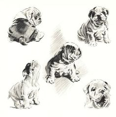 87 best bulldogs drawing images on pinterest in 2018 english english bulldog 5 dog art print m dennis n ccuart Image collections