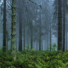 """przejście do całej galerii """"w lesie"""""""