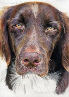"Pencil Artist Corinne's Portraits (French) | Chien/Dog |  http://youtu.be/90UveiefY1c Crayons de couleur (Faber-Castell ""classic"" et Derwent ""drawing"")/Colored pencils (Faber-Castell ""classic"" and Derwent ""drawing"") 2012"