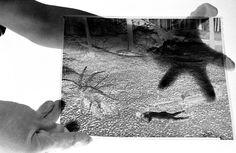 En 1979, Richard Avedon a entamé un projet qu'il a intitulé In The American West; mais déjà auparavant, il avait prévu de photographier un homme couvert d'