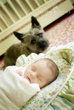 keeping a watchful eye over the new addition. he was so sweet (the dog, I mean). #newborn #photography