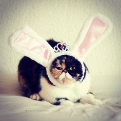 41 Best Easter Cats Images Easter Cats Black Cats Easter Bunny