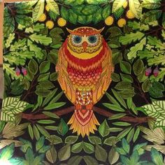 Owl - Secret Garden. Coruja- Jardim Secreto. Johanna Basford