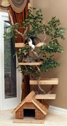 Large Indoor Cat Tree House and Platforms Surrounding a Real Tree!