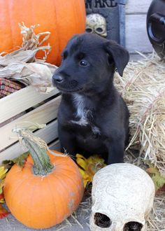 Grace Kelly is an adoptable dog with Rocky Mountain Puppy Rescue.
