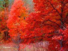 """""""Fall in Northern Michigan"""""""