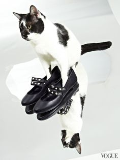 March 13 - Buy these studded Mary Janes now and get a leg up on fall. Adopt Florence and have a lovely pal to purr with—and about.Saint Laurent Classic Dance studded strap ballerina flats, $1,045ysl.comFlorencebideawee.org@bideawee