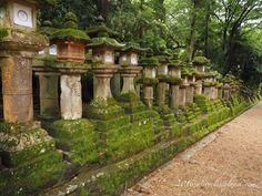 Kasuga-taisha stone lanterns  #mirrorlessplanet #kasugataisha #stonelantern #japan #nara #travel #landscape #structure #olympusomd #getolympus #olympuscamera #日本 #奈良 #春日大社