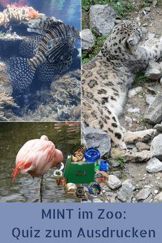 Ausflugstipp : Chemie und Co im Zoo - Keinsteins Kiste Quiz, Kindergarten, Free, Physical Science, Amphibians, Physics, Chemistry, Wild Animals, Crate