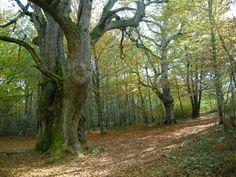 Piérdete por los robledales de la Sakana... #Navarra (http://www.turismo.navarra.es/esp/organice-viaje/recurso/Patrimonio/5041/Comarca-de-la-Sakana.htm)