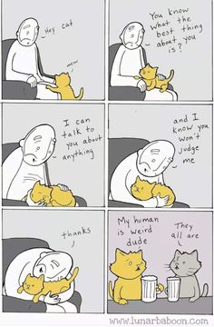 12 Hilarious Comics That Reveal The Reality Of Living With Cats - We Love Cats and Kittens Funny Cat Memes, Funny Cats, Funny Animals, Cute Animals, Hilarious, I Love Cats, Crazy Cats, Cute Cats, Cat Comics