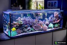 A room divider - - page 7 - Aquarium presentation sea water - . Coral Reef Aquarium, Saltwater Aquarium Fish, Saltwater Tank, Marine Aquarium, Marine Fish Tanks, Marine Tank, Home Aquarium, Aquarium Design, Aquarium Ideas