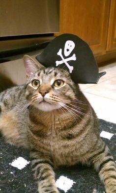 Arrrrh! Pirate Kitty! #CrosbyTheCrazyChristmasCat