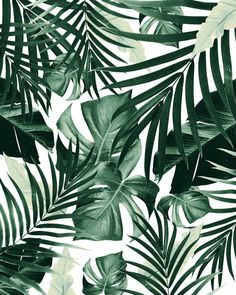 Tropical Jungle Leaves Pattern Window Curtains to wallpaper around windows Art Prints