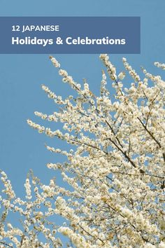 Get ready to mark your calendar! Here are 12 Japanese celebrations you should remember. This is a great way to practice your skills in an authentic, cultural setting. Japanese Celebrations, Learn Japanese Words, Calendar, Celebrities, Language, Holidays, Celebs, Holidays Events, Holiday