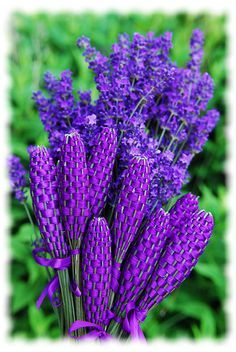 Lavender wands. Lavender crafts, how to make a lavender wand http://www.happyvalleylavender.com/lavender-projects.php
