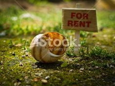 Home for rent Royalty Free Stock Photo Renting A House, My Photos, Royalty Free Stock Photos, Place Card Holders, Projects, Image, Home, Log Projects, Blue Prints