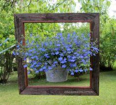 Carlene's brilliant idea to 'frame' a hanging basket