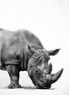 ARMAS, Aythamy (Canarias, 1977).Rinoceronte.