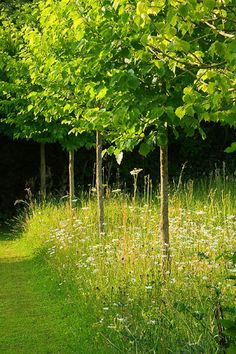 Veddw House Garden, on the Welsh border above Tintern, Monmothshire. A unique and contemporary country garden designed by Anne Wareham and Charles Hawes. Meadow Garden, Woodland Garden, Garden Cottage, Back Gardens, Outdoor Gardens, Wild Flower Meadow, Wild Flowers, Natural Garden, Family Garden