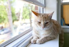 7 Signs of Arthritis in Cats | petMD