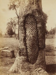 Old photograph of an Aboriginal dendroglyph or carved tree, from Western NSW, Australia. These magnificent carvings were usually carried out by the Wiradjuri and Gamilaroi and possibly functioned as grave posts and as part of initiation ceremonies. Aboriginal History, Aboriginal Culture, Aboriginal People, Aboriginal Art, Aboriginal Symbols, Kunst Der Aborigines, Inka, Art Premier, Tree Carving