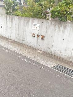 shiba wall