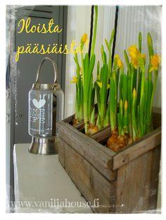 Hauskaa pääsiäistä! Celery, Vegetables, Food, Vegetable Recipes, Eten, Veggie Food, Meals, Veggies, Diet
