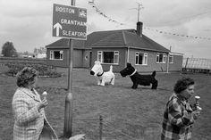 Martin Parr GB. England. Lincolnshire. Spalding. 1974.