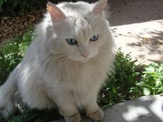 Image result for tan cats