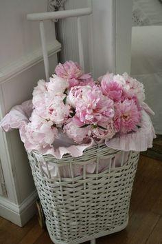 Pink Peonies~