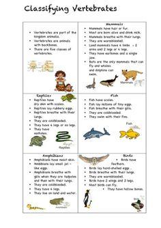 Short descriptions of all vertebrates