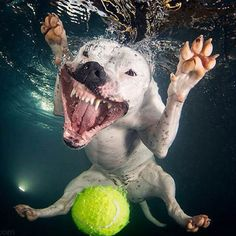 Under Water Picture Of A Dog