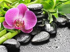 Stock image of 'spa concept with zen stones and orchid'