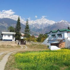We can't get over this gorgeous scenery in Dharamsala, India. We found this house on Airbnb