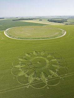 Codford Circle, Wiltshire   3rd June 2010   Barley L2