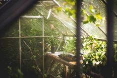 48 Meilleures Images Du Tableau Mon Jardin Dété Jardins