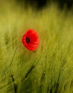 Red and green by Tamás Hauk on 500px