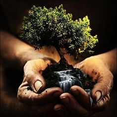 This is an incredible photo manipulation. The mini tree and soil look real. The water looks a little fake. It would have made it more realistic if the water poured over the person's hands. The soil under the person's hands makes it look like they picked it right out of the ground.