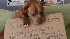 'Why doesn't anybody want me?' Heart-melting photo helps dog find home