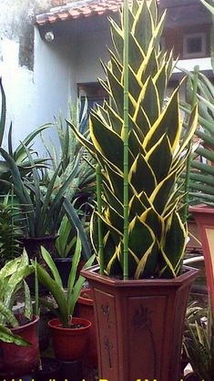 Easy To Grow Houseplants Clean the Air S.