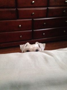 Patiently waiting for my human to get up