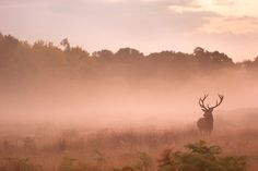 I Capture The Magnificent Deer Living In Richmond Park In The Middle Of London