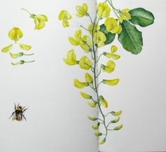 Botanical Sketches and Other Stories: Laburnum and The Bee
